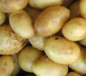 фото описание картофель гала сорта