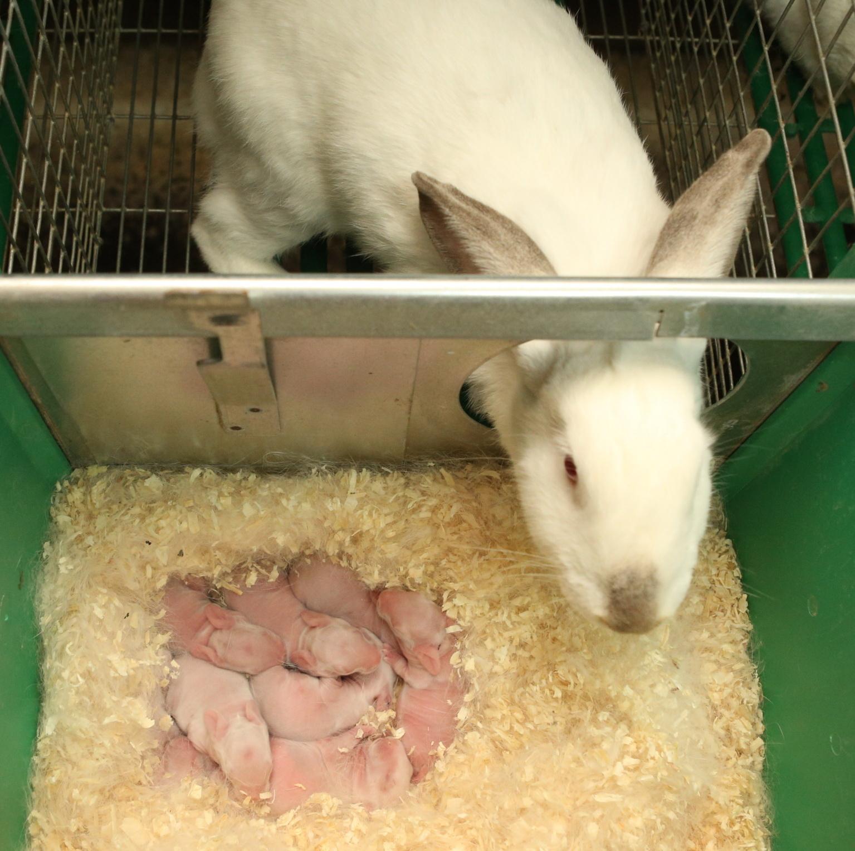 Как ухаживать за кроликами в домашних условиях фото