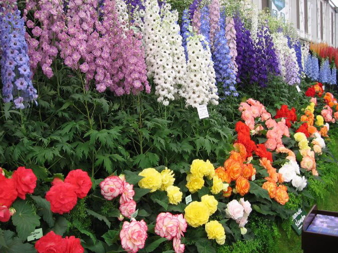 Цветоводство на даче для начинающих видео, какие цветы