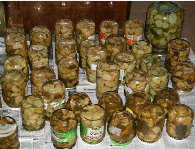 грибы закатанные