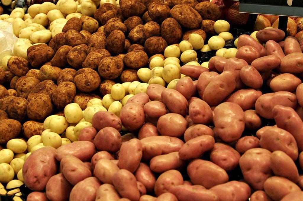 как получить большой урожай картофеля