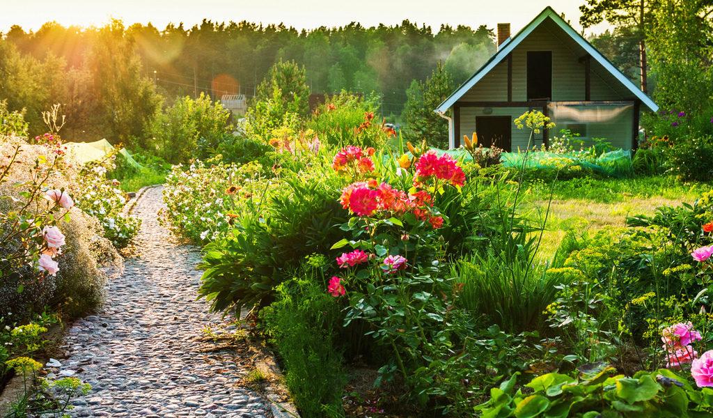 какие цветы посадить в июле-сентябре на даче