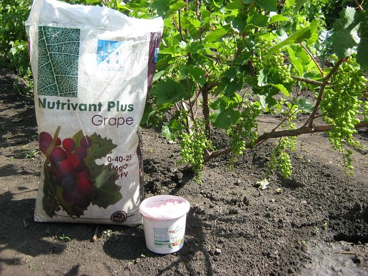 как подкармливать виноград