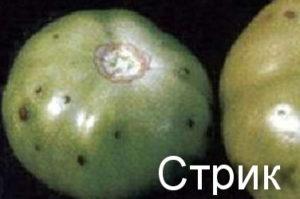 Стрик на томатах