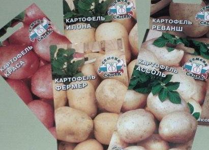 Плюсы выращивания картофеля из семян