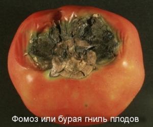 Фомоз или бурая гниль плодов