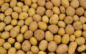 картофель невский описание сорта и основные характеристики