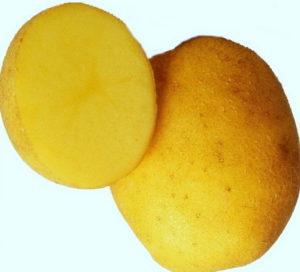 картофель венета описание сорта фото