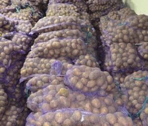 хранение картофеля венета