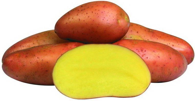 характеристики картофеля ред скарлет