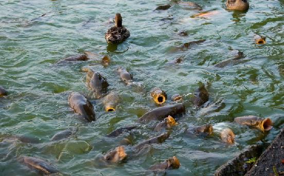 Разведение рыбы в искусственных водоемах как бизнес