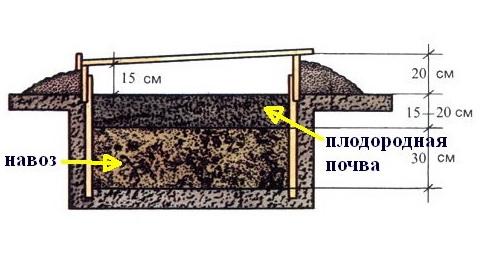 Биологическое отопление теплицы
