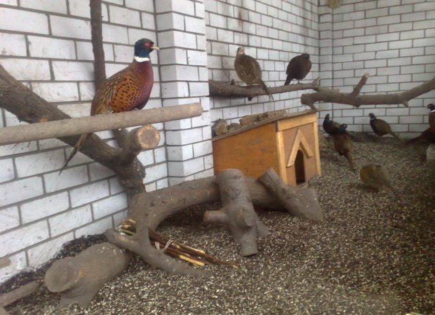 выгул для фазанов
