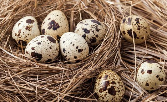 бизнес на продаже перепелиных яиц