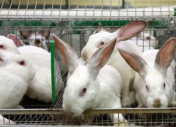 разведение кроликов как бизнес выгодно