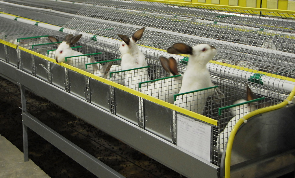 разведение кроликов как бизнес выгодно или нет
