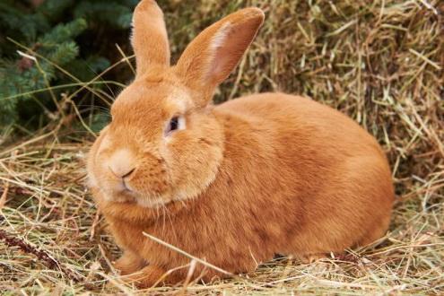 кролики для начинающих