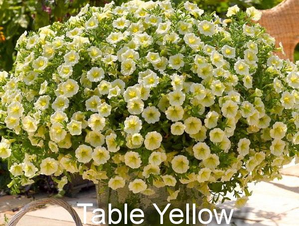 петуния Table Yellow