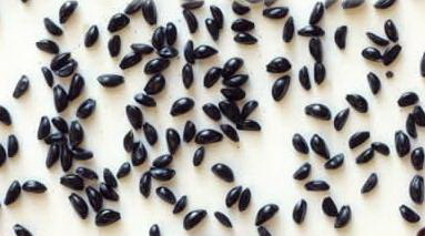 Посадка семян аквилегии на рассаду
