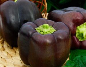 семена перца болгарского лучшие сорта для теплиц