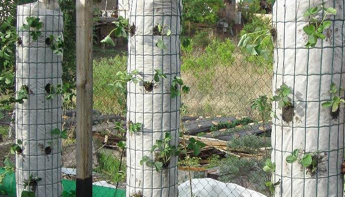 клубничные колонны
