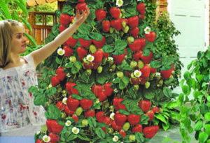 как посадить клубнику красиво