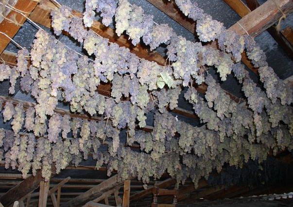 хранение винограда на чердаке