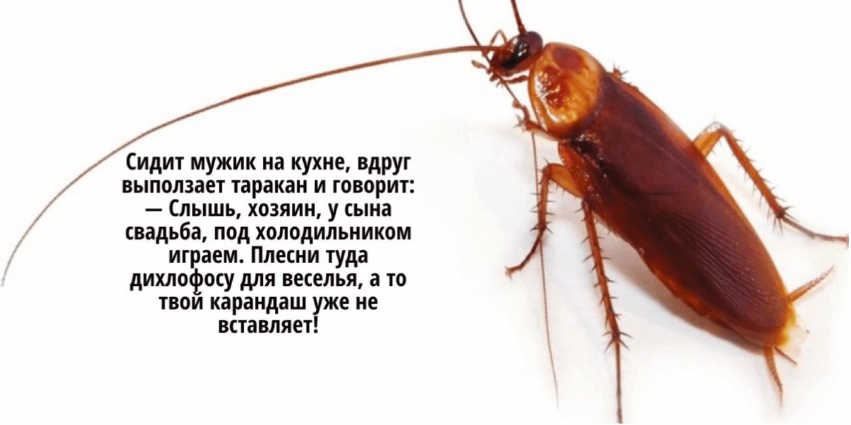 как избавиться от домашних тараканов в квартире
