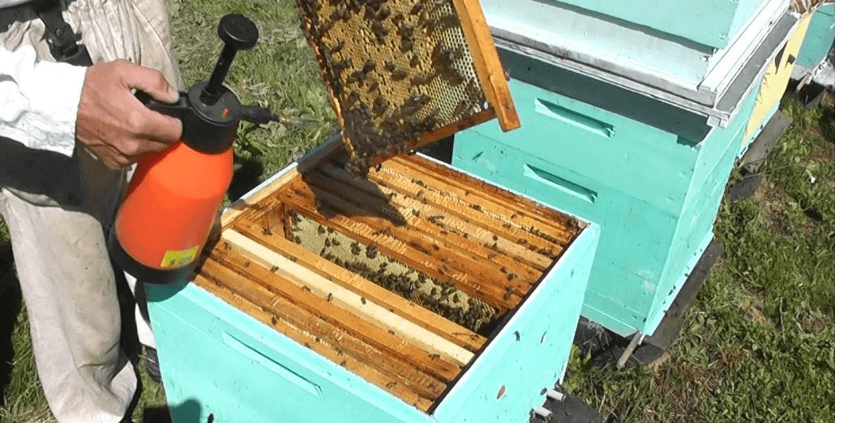 росинка для усмерения пчёл